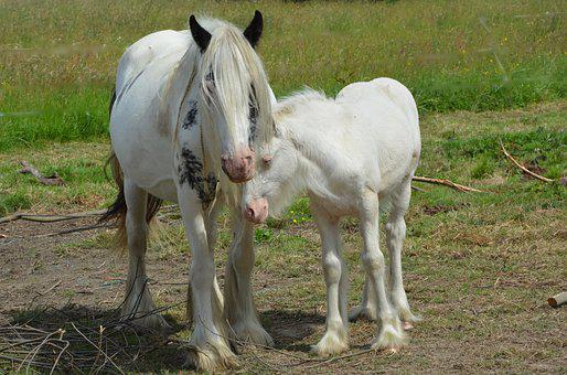 Mare, Foal, Equines, Horses, Horse, Pre