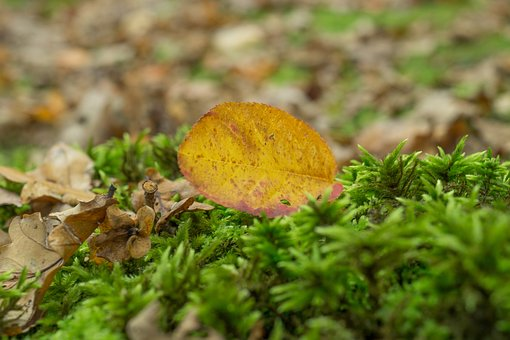 Leaf, Grass, Plants, Nature, Ground, Fall