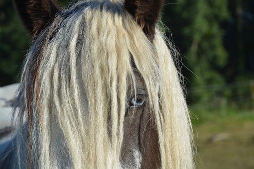 Horse, Standard, Irich-cob, Horseback Riding, Mane