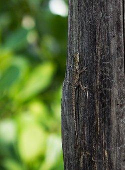 Lizard, Tree, Wild