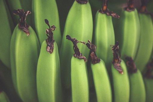 Green, Plantains, Fruits, Food