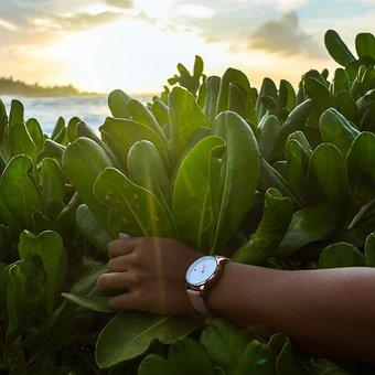 Green, Plants, Nature, Hands, Watch, Sunset
