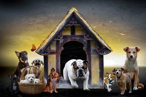 Animals, Dogs, Puppies, Schäfer Dog, Pug, Chiwawa
