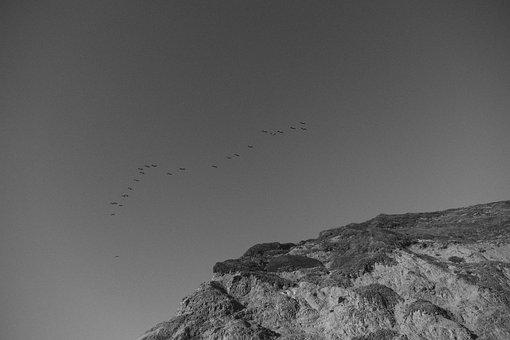 Birds, Flock, Flying, Animals, Sky, Grey