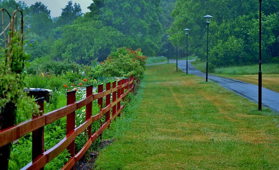 Fence, Forest, Natur, Landscape, Natural, Green, Summer