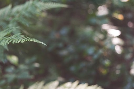 Forest, Woods, Nature, Blurry, Plants