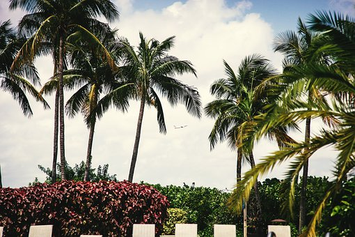 Palm Trees, Shrubs, Lounge Chairs, Tropical, Vacation