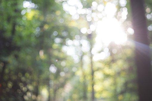 Forest, Woods, Trees, Nature, Sunshine, Sunlight