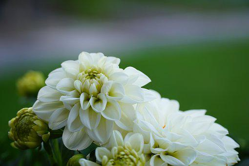Flower, Nature, Plant, White Flower, Of Course, White