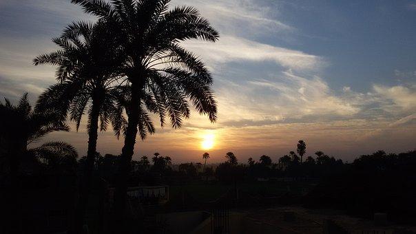 Sunrise, Palms, Morning, Hope, Fresh, Air, Home, Clouds