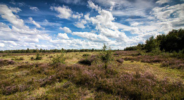 Heide, Heather, Eifel, Drover Heath, Landscape, Nature