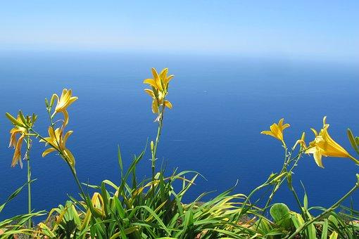Flower, Sea, Nature