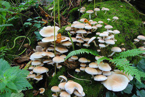 Fungi, Toadstools, Fungus, Forest, Poisonous, Natural
