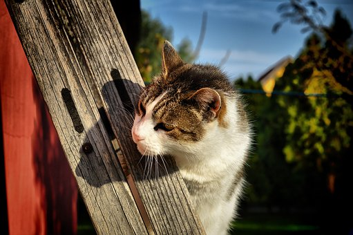 Cat, Pets, Kitten, Domestic Cat, Curious, My Favorite
