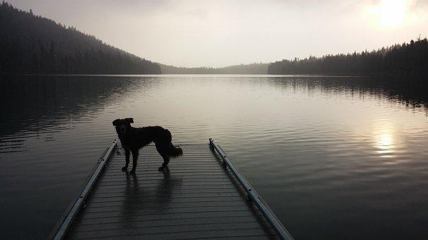 Dog, Lake, Dock, Oregon, Suttle Lake