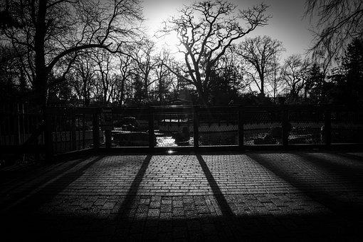 Trees, Fence, Cobblestone, Shadows