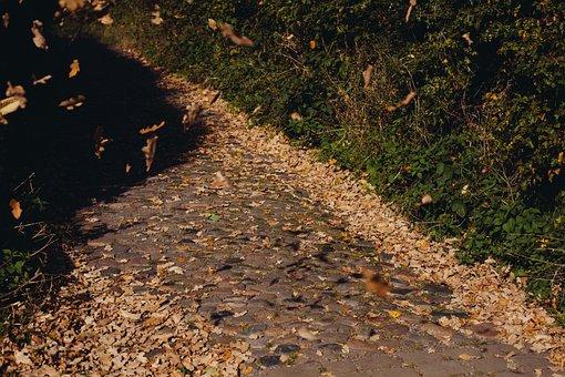 Cobblestone, Path, Leaves