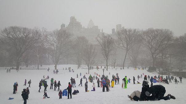 Snow, Central Park, New York, New, Cold, Tree, York