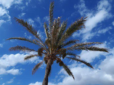 Palm, Sky, Clouds, Tropical, Summer, Weather, Climate