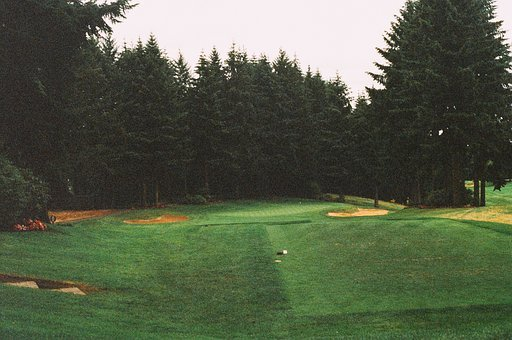 Golf Course, Fairway, Green, Sand Trap, Sports, Trees