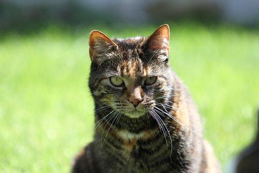 Cat, Pet, Domestic Cat, Tortoise Shell, Dear, Beautiful