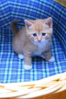 Kitten, Cart, Sweet, Small, Cat, Mustache, Cat Whiskers