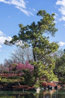 Zen, Zen Garden, Japanese Zen Garden, Garden, Japanese