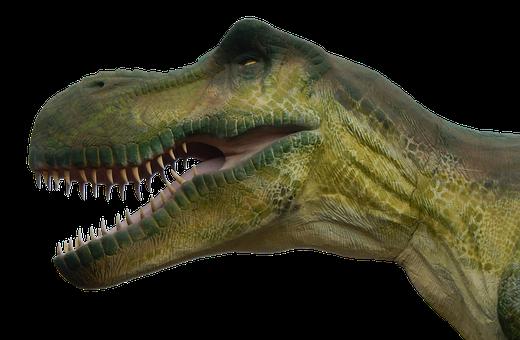 Dinosaur, Prehistoric Times, Dino, Reptile, T Rex