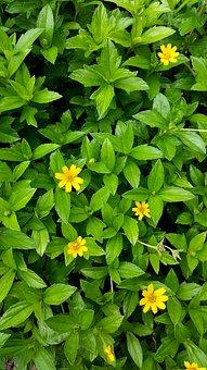 Yellow, Green, Flora, Design, Nature, Summer, Colour