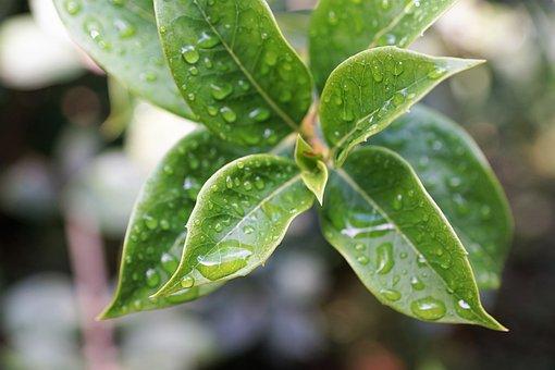 Leaf, Nature, Bio, Organic, Vegan, Herb, Plant, Trees