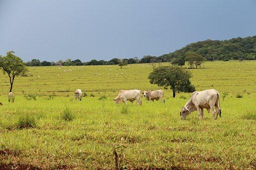 Field, Agriculture, Agribusiness, Mato Grosso Do Sul