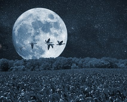 Night, Moon, Birds, Scenery, Trees, Artistic, Art Print