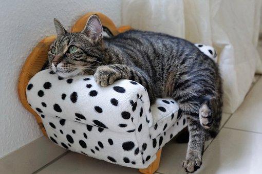 Cat, Sweet, Tiger, Tigerle, Pet, Young Cat, Cute