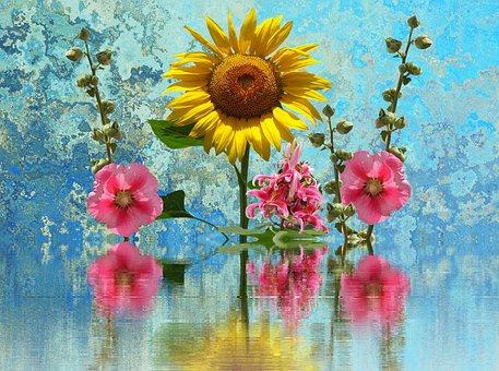 Sun Flower, Summer, Hollyhock Flower, Flower, Yellow