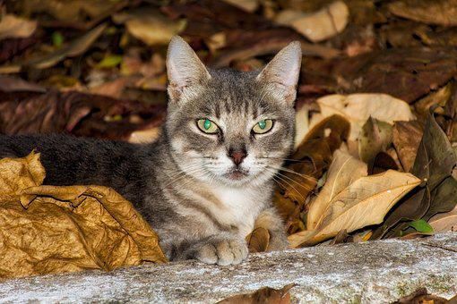 Cat, Animal, Kitten, Feline, Animals, Feline Look, Pet