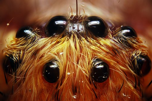 Spider, Insect, 8 Eyes, Macro