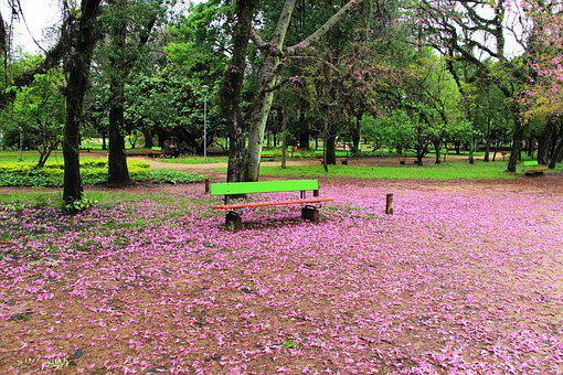 Square, Porto Alegre, Brazil, Nature, Eventide