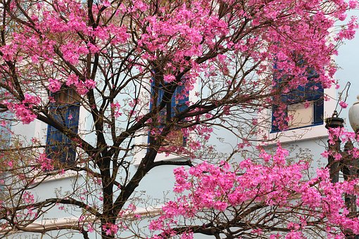 Tree, Porto Alegre, Brazil, Tree Colorful