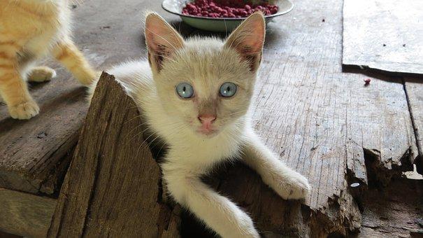 Cats, Kitten, Animal, Feline Look, Animals