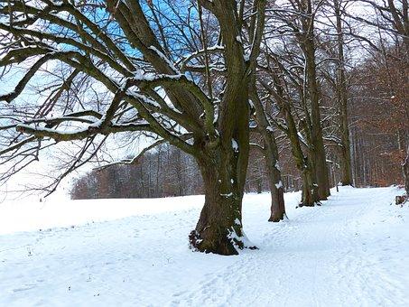 Tree, Avenue, Snow, Snowy, Winter, Cold, Field, Away
