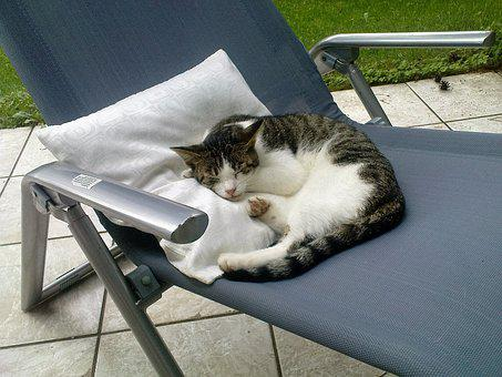 Cat, Deck Chair, Terrace, Sleep