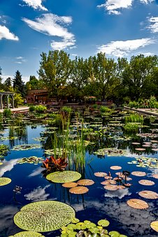Denver, Colorado, Botanic Gardens, Botanical, Plants