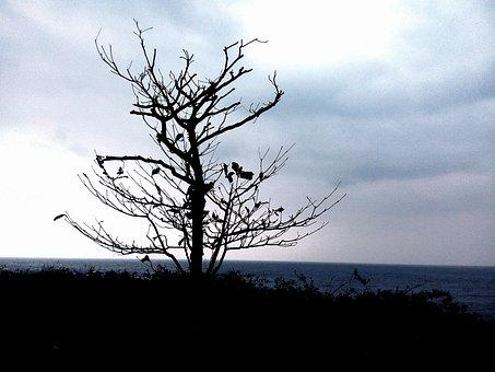 Dead Tree, Winter, Hai Bian, See, Shadow