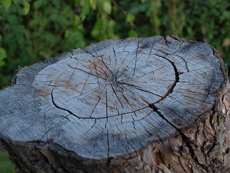 Stump, Deck, Tree, Texture, Blockhouse, Wood, Rings