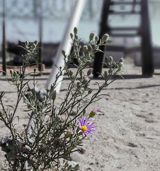 Flower, Daisy, Barrier, Prison, Adversity, Wire