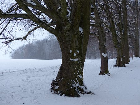 Tree, Avenue, Snow, Face, Forest Spirit, Heart, Snowy