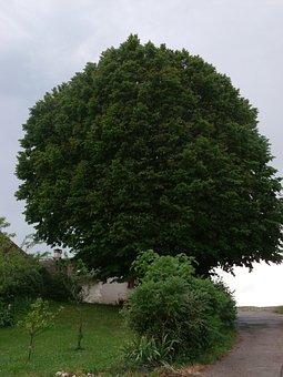 Tree, Linden, Landscape, Green, Foliage, France, Calm