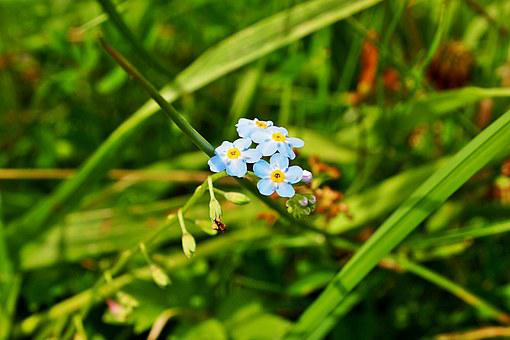 Do Not Forget About Me, Blue Flower, Grass