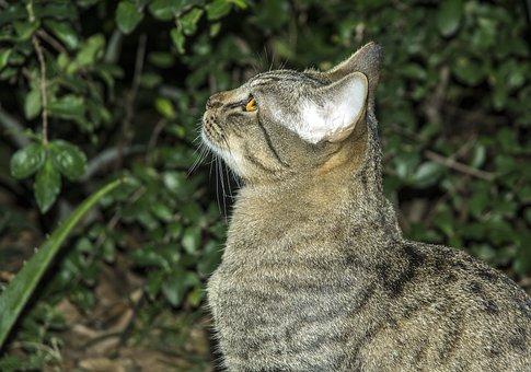 Cat, Pet, Feline, Kitten, Cat Face, Feline Stopped