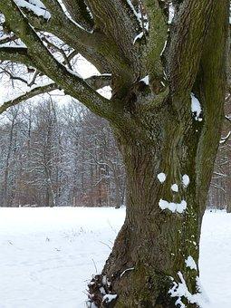 Tree, Gnarled, Old, Linde, Face, Forest Spirit, Snow